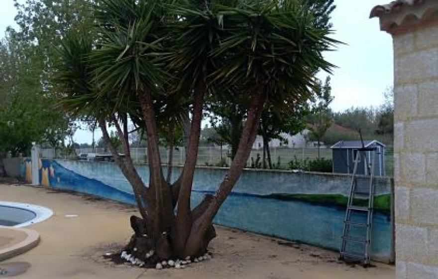il est pas beau le yucca de la piscine !